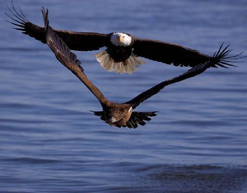 Voando-Juntos.jpg
