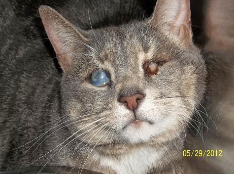 blind cat rescue and sanctuary!: 5/6/2014