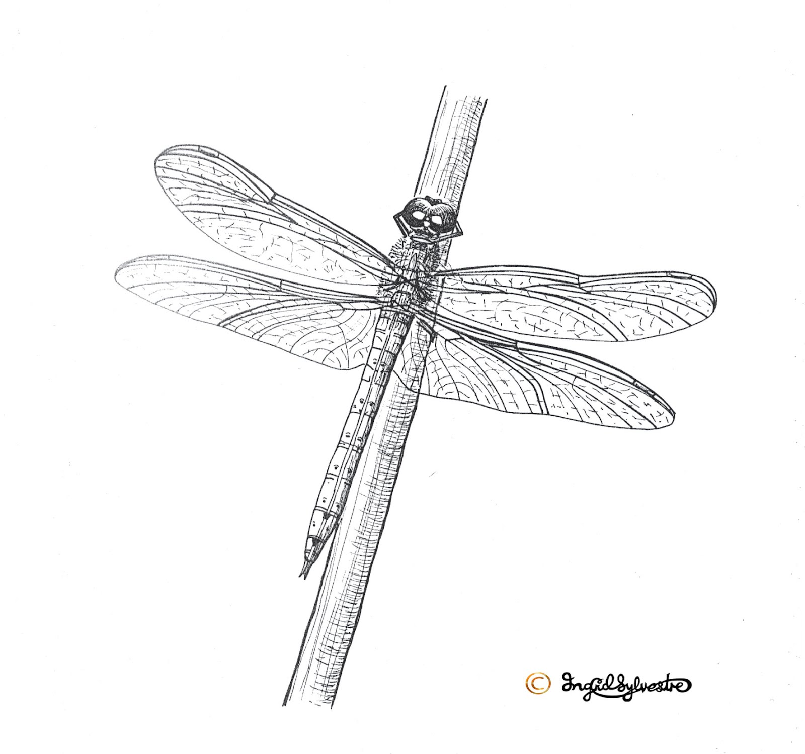 79 Artistic Dragonfly Tattoo Designs To Ink Sexy Your Body
