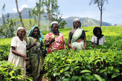 Tea pickers in Sri Lanka