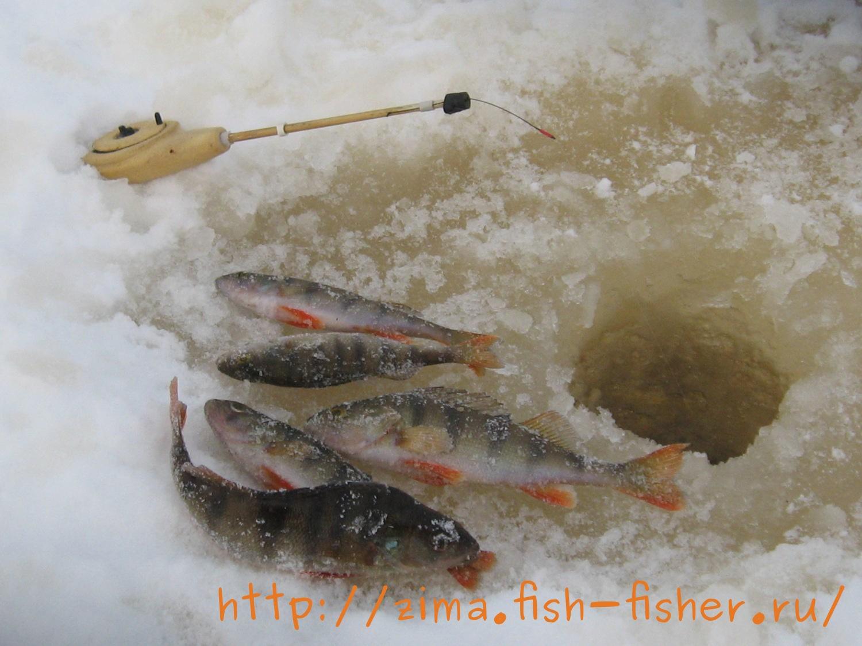 Зима рыбалка окунь