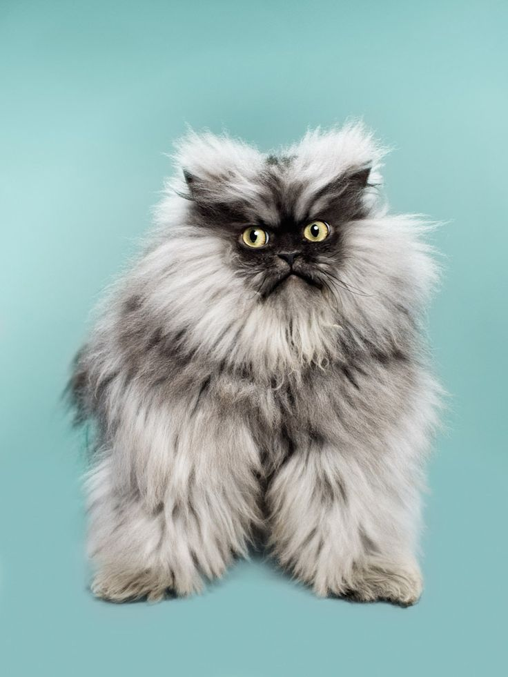 Top 10 Internet Celebrity Cats