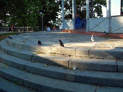 Голуби у беседки на Владимирской горке