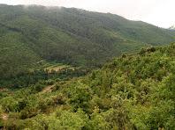 La zona del Bosc de Boencs tot baixant cap a la riera de Merlès