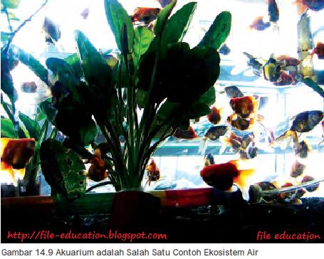 Hubungan Antar Komponen Ekosistem Biotik Dan Abiotik Alsen Saloka Blog S