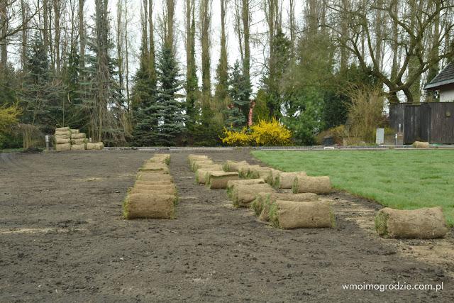 trawnik z siewu usługa zakładanie układanie