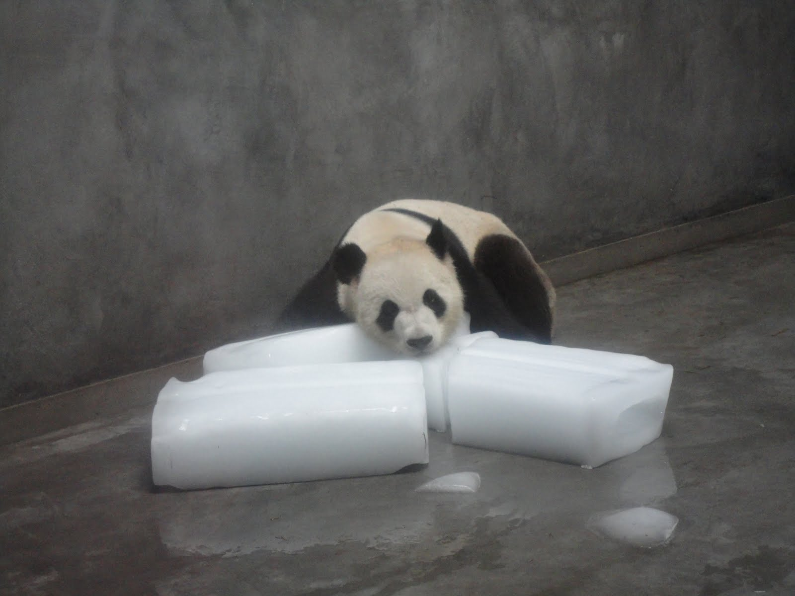 http://4.bp.blogspot.com/-MduVtqmp6Y4/TlEi3oYcyMI/AAAAAAAAAB8/JC5N8lIRyTg/s1600/china+356.jpg