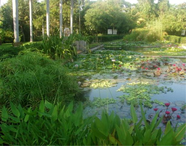 Turismo culiacan m xico jard n bot nico culiac n for Botanico jardin