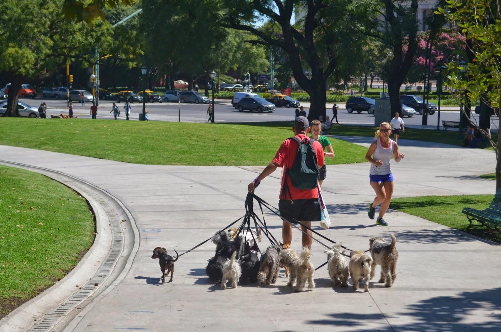 dog walker buenos aires argentina