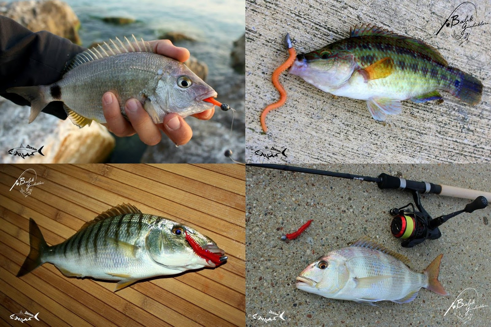 Eşkina Nasıl Bir Balık Türüdür