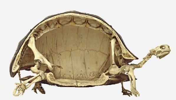 Zona Reptil: TORTUGAS Y GALAPAGOS