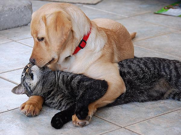 cat And Dog Love Wallpaper : cool Animals Pictures: cats And Dogs Love Friendship Of cat And Dogs