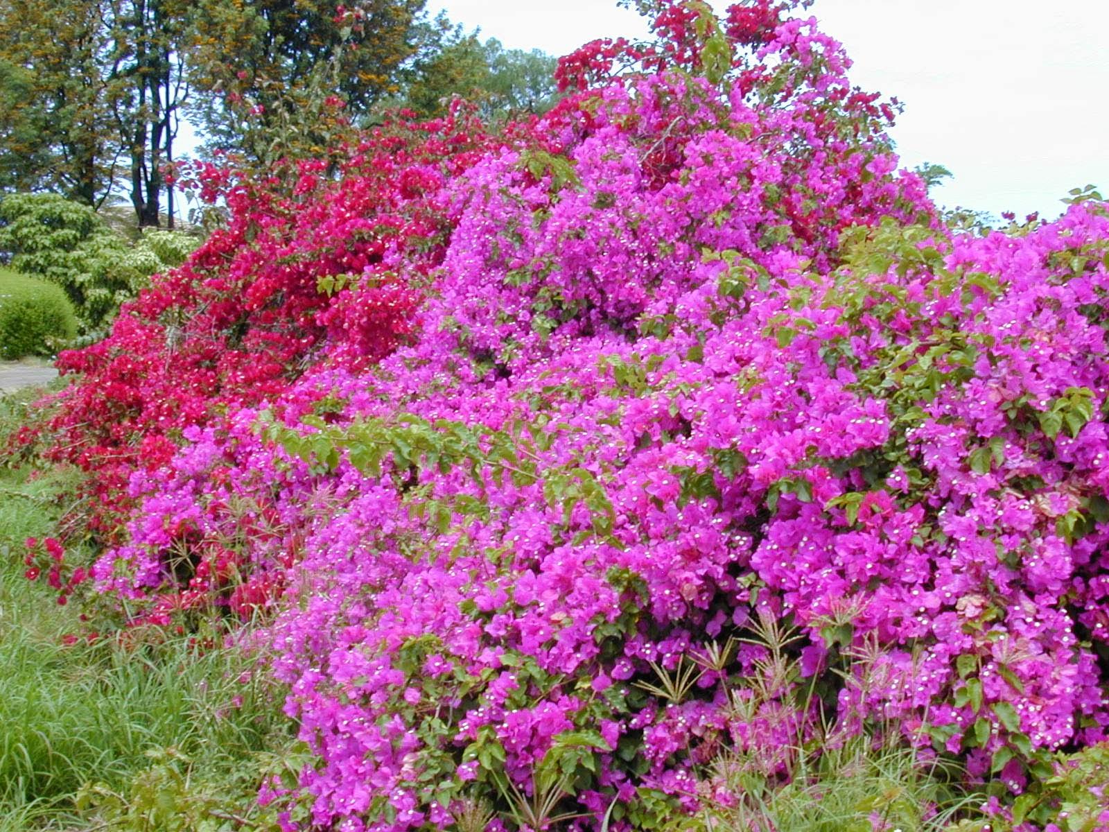 Flor de maio cuidados – Jardim Flor do Leste