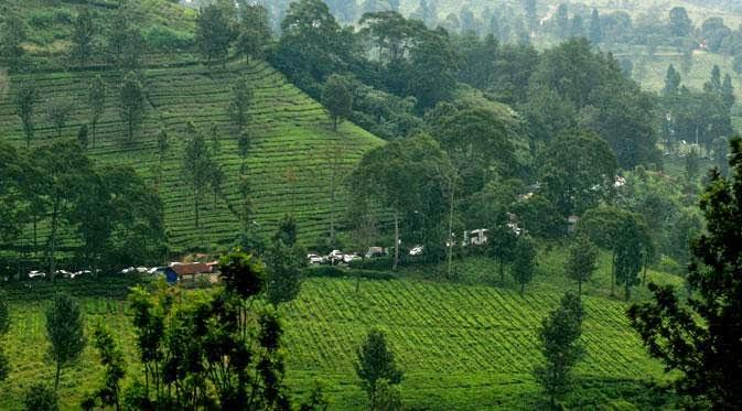Peristiwa: Jejak Purba Manusia Sumatera
