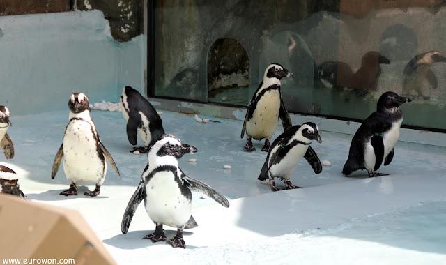Pingüinos en el parque de atracciones Everland de Corea