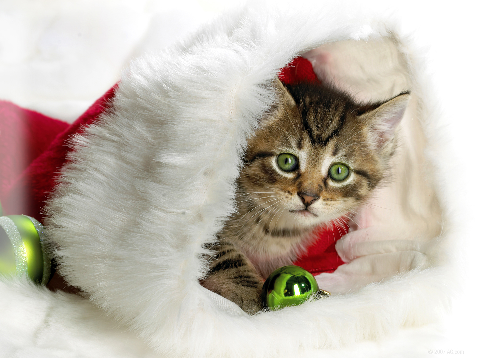 Kittens have CHristmas, too Hd Wallpaper ~ The Wallpaper Database