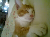 kucing saya :'(