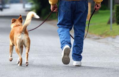 passeando cão