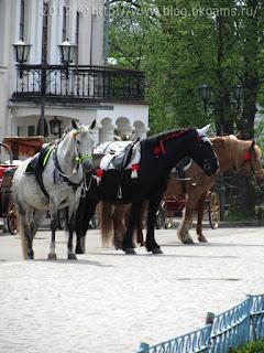 Лошади былинных богатырей: Алеши Поповича, Ильи Муромца и Добрыни Никитича