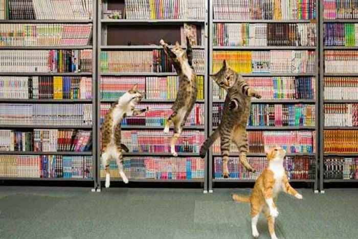 Flying Cats Amazing Photos