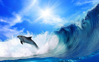 Jumping Dolphin High Waves HD Wallpaper