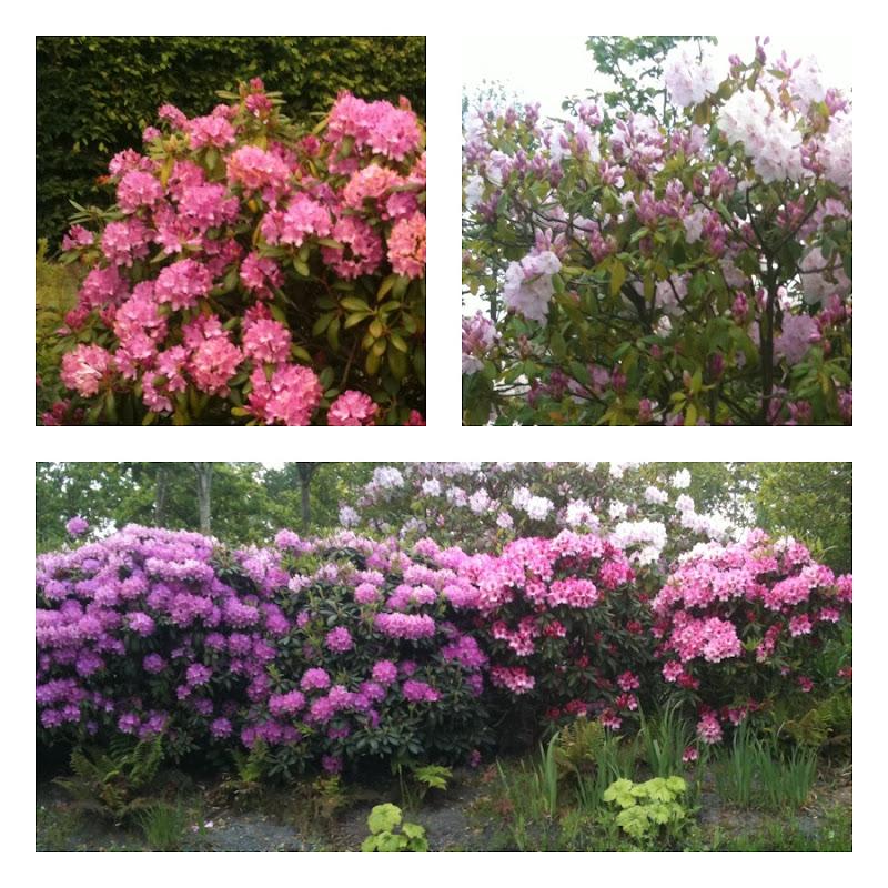 ces doux moments terra botanica angers maine et loire pr 233 senter la flore de 232 re ludique