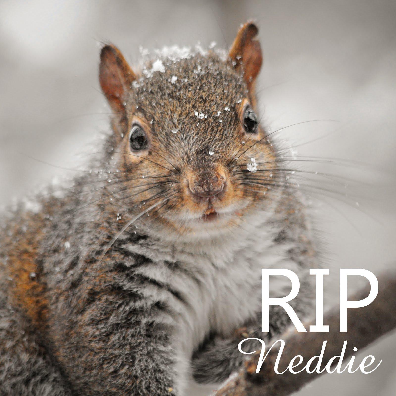 My Handsome Neddie