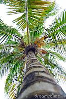 palmeiras-licoes