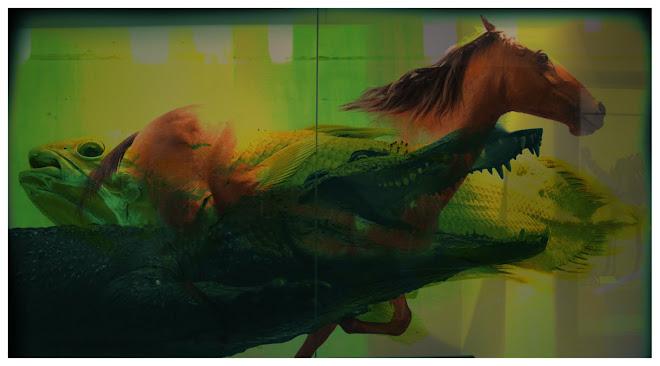"""A Fish, a Horse and a Croc"""