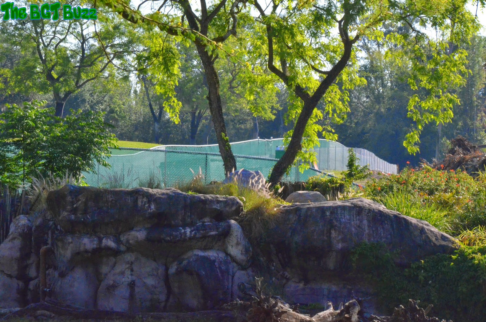 The Bgt Buzz Busch Gardens Tampa Project 2016