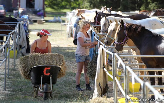 Ponies in the Mounted Games, Horse of the Year, Hawke's Bay Showgrounds photograph