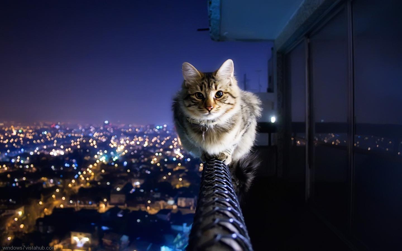 http://4.bp.blogspot.com/-MiK5eFX4VoM/UB9kmlyfikI/AAAAAAAACTY/HHo8wStKGqk/s1600/11384_Cat__6.jpeg