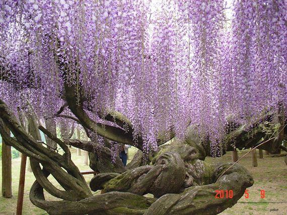 Amazing Fairy Tale Flower Tunnel In Japan