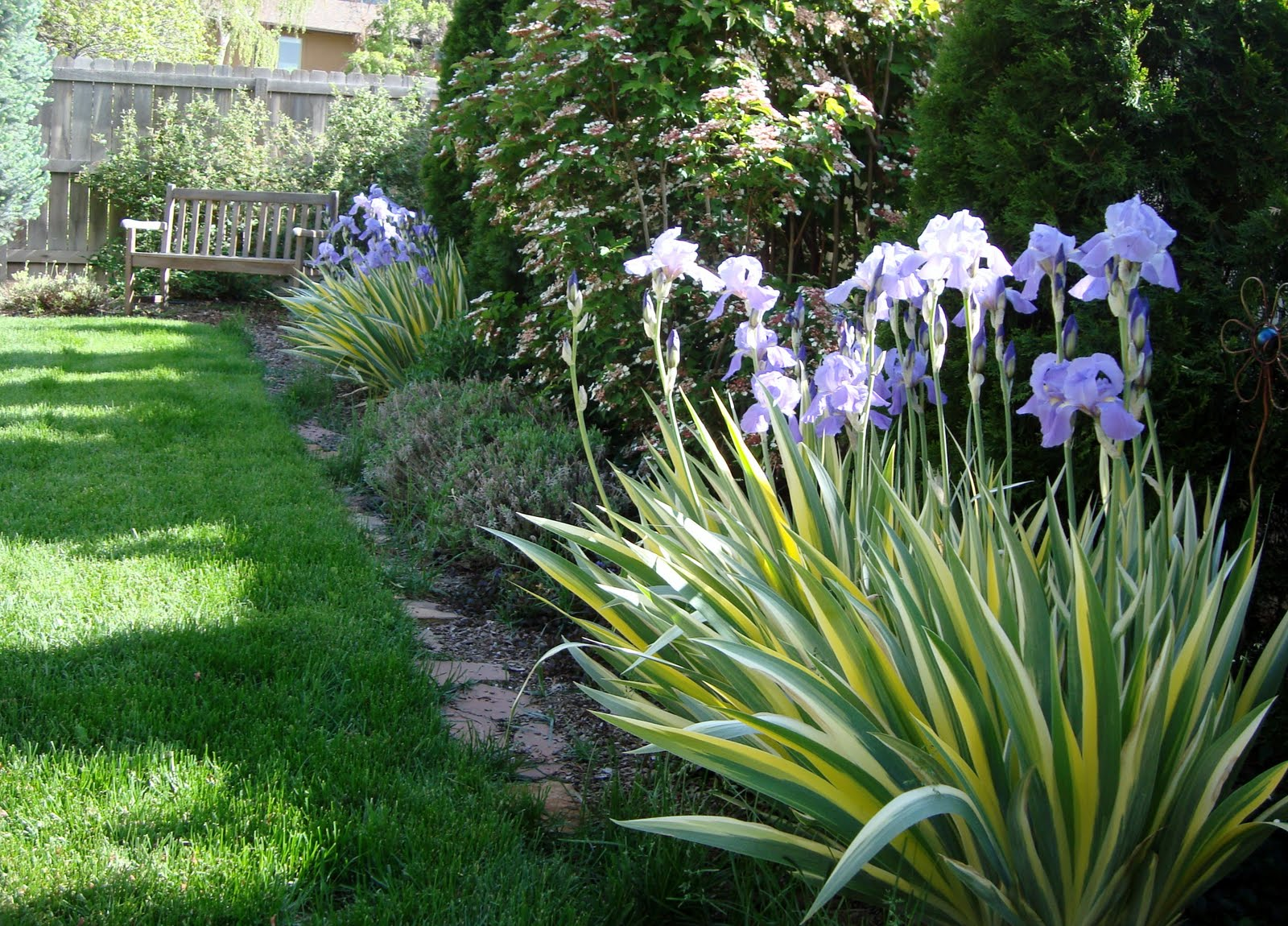 Lavender and so much more mixed border ideas for Narrow flower bed ideas