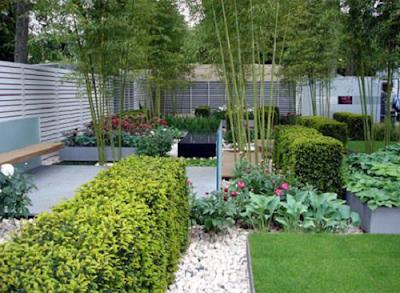 Lưu ý yếu tố phong thủy khi trồng cây cảnh trong nhà