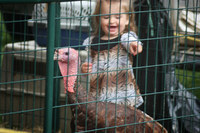 Little girl excited about turkey at petting zoo