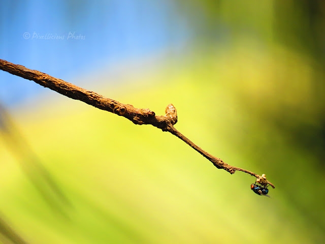 A fly on a tree branch