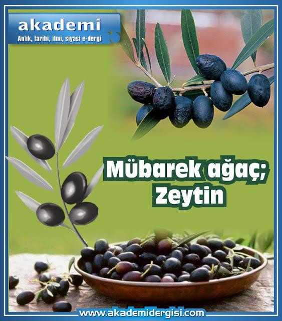 Mübarek ağaç; Zeytin