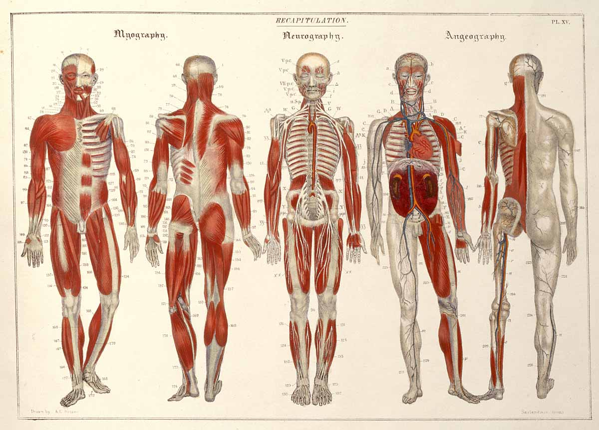 Peak Educational Resources Anatomy For Kids