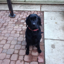 MAZIE- SCENTHURDLE DOG MASTER