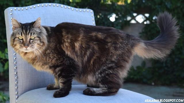 http://asalasah.blogspot.com/2015/08/kucing-berusia-26-tahun-pegang-gelar.html