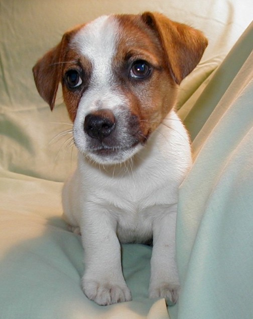 gallery puppies pictures