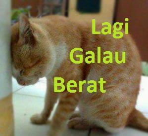 gambar kucing galau