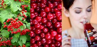 Cranberry Farming Business