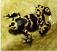 Amazonia Animal