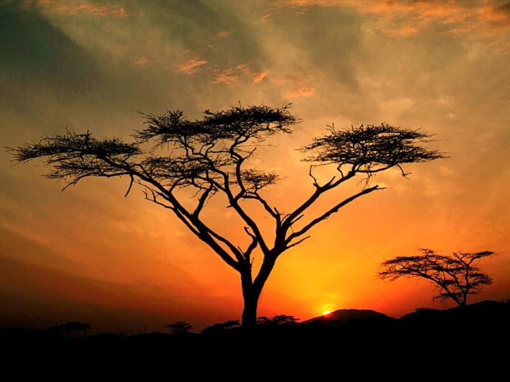http://4.bp.blogspot.com/-Mk9t80klZ_c/TcM1TApQS1I/AAAAAAAABPc/syf6GK76tQY/s1600/African-Sunset-Wallpaper_0605201102.jpg