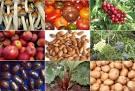 Bahan Makanan Yang Mengandung Zat Berbahaya
