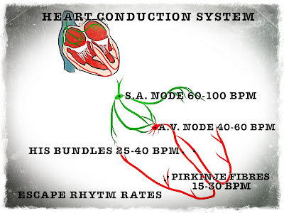 The contraction rates of different parts of the cardiac conduction system