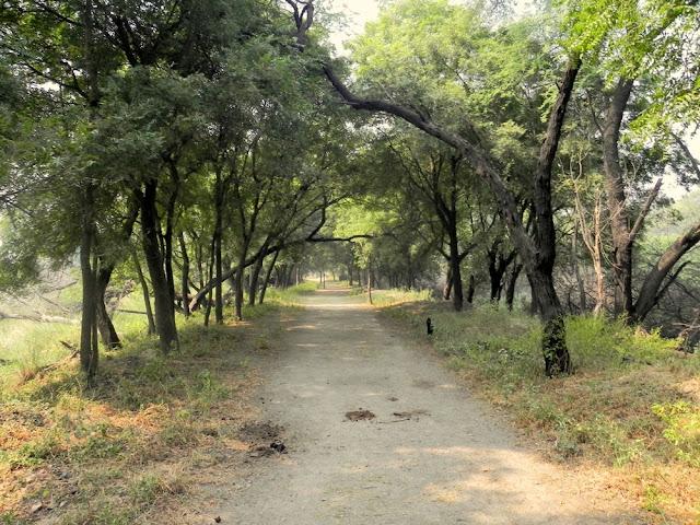 Birding in Sultanpur National Park