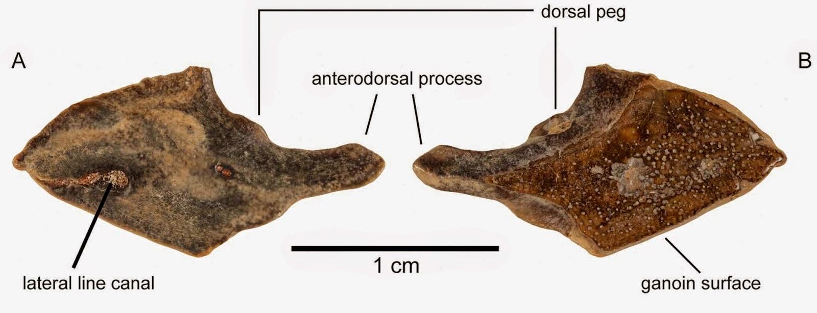 http://sciencythoughts.blogspot.co.uk/2014/05/eocene-non-marine-vertebrate-remains.html
